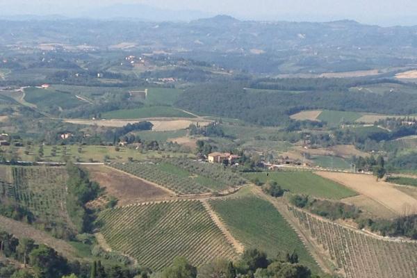 Veni, Vidi, Vini Bianchi: Italian White Grapes You Need to Know